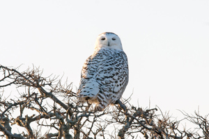 new england wildlife Photos