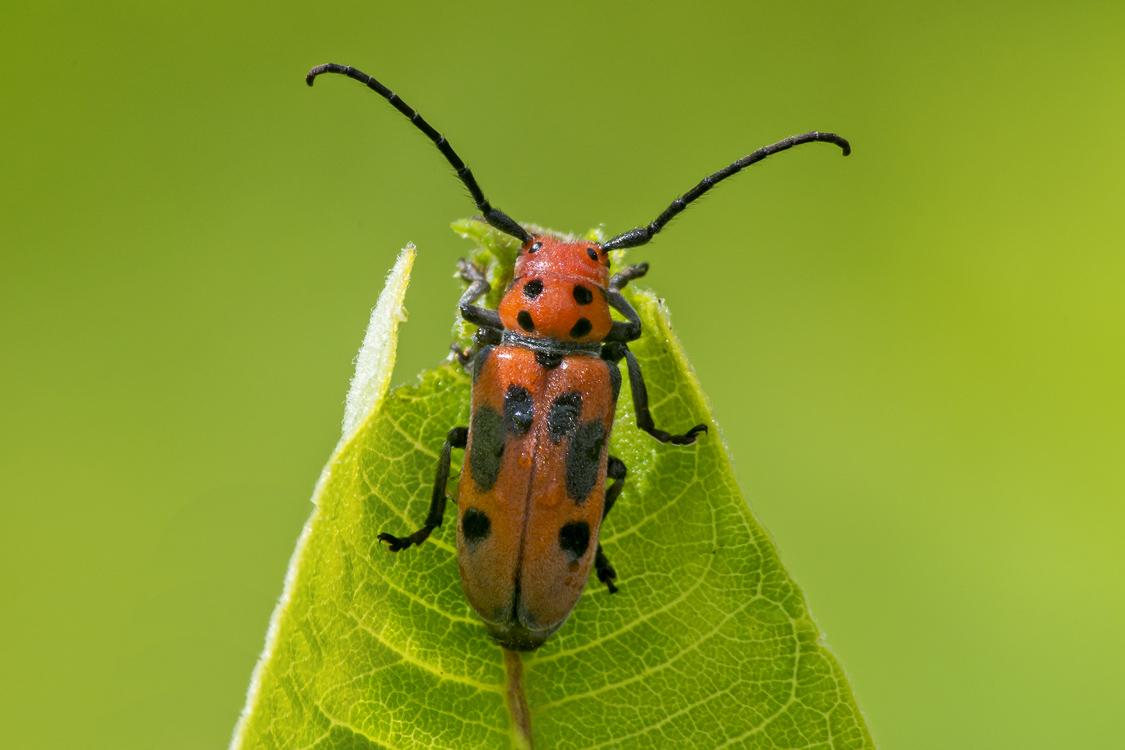Beetles of new england Photos