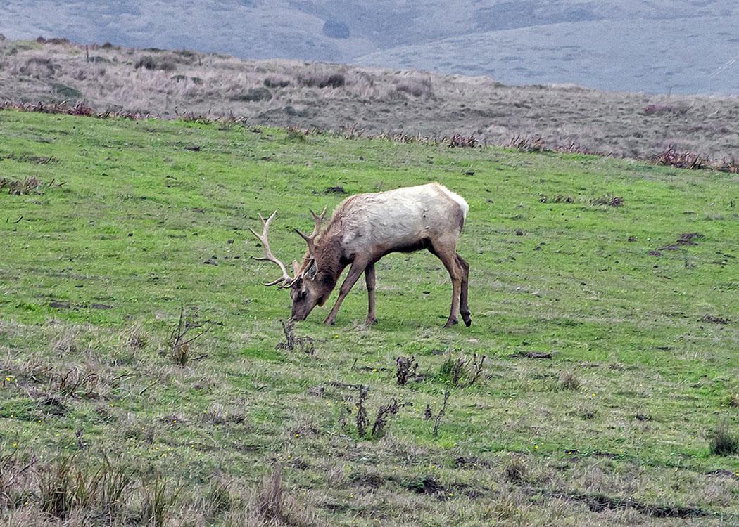 Non New England wildlife